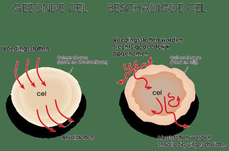 EQology - gezonde cel vs beschadigde cel